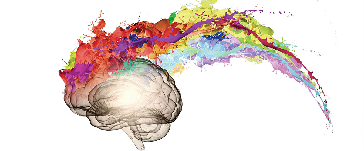 brain with different colours