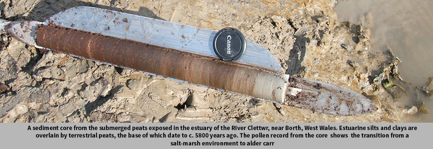 A sediment core from the submerged peats exposed in the estuary of the River Clettwr, near Borth, West Wales. Estuarine silts and clays are overlain by terrestrial peats, the base of which date to c. 5800 years ago. The pollen record from the core shows the transition from a salt-marsh environment to alder carr